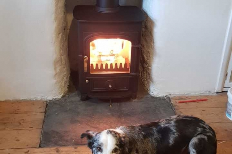 Clearview woodburner and the dog in Cornwall
